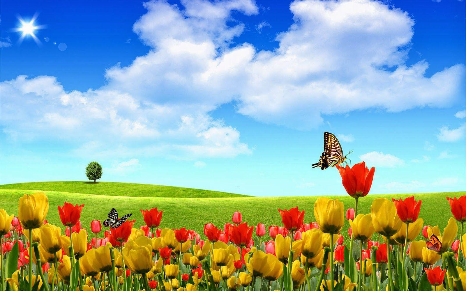 Foto zomer wallpapers hd zomer achtergronden 22 landschap bloemen gele tulpen rode tulpen - Foto wallpaper ...