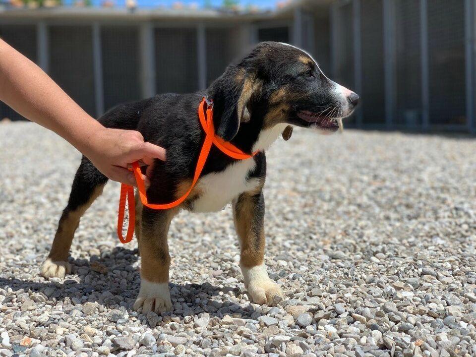 Flox Coole Socke Sucht Noch Cooleres Zuhause In Bayern Kranzberg Coole Socken Hunde Socken