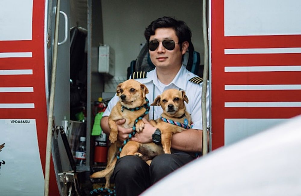 Next Flight In Arkansas 100 Dogs Cats Are Waiting For Their