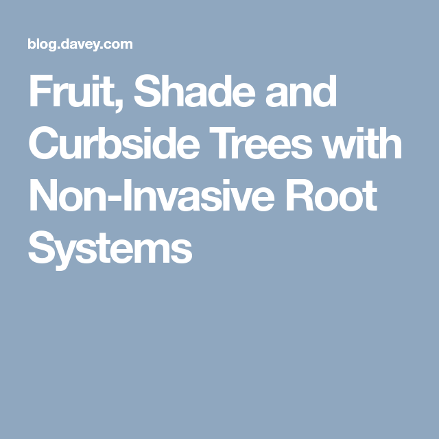 Fruit Shade And Curbside Trees With Non Invasive Root Systems