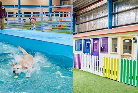 Dubai Dog City The Indoor Resort Dedicated To Pampered Pets City Dog Pets Pamper Pets