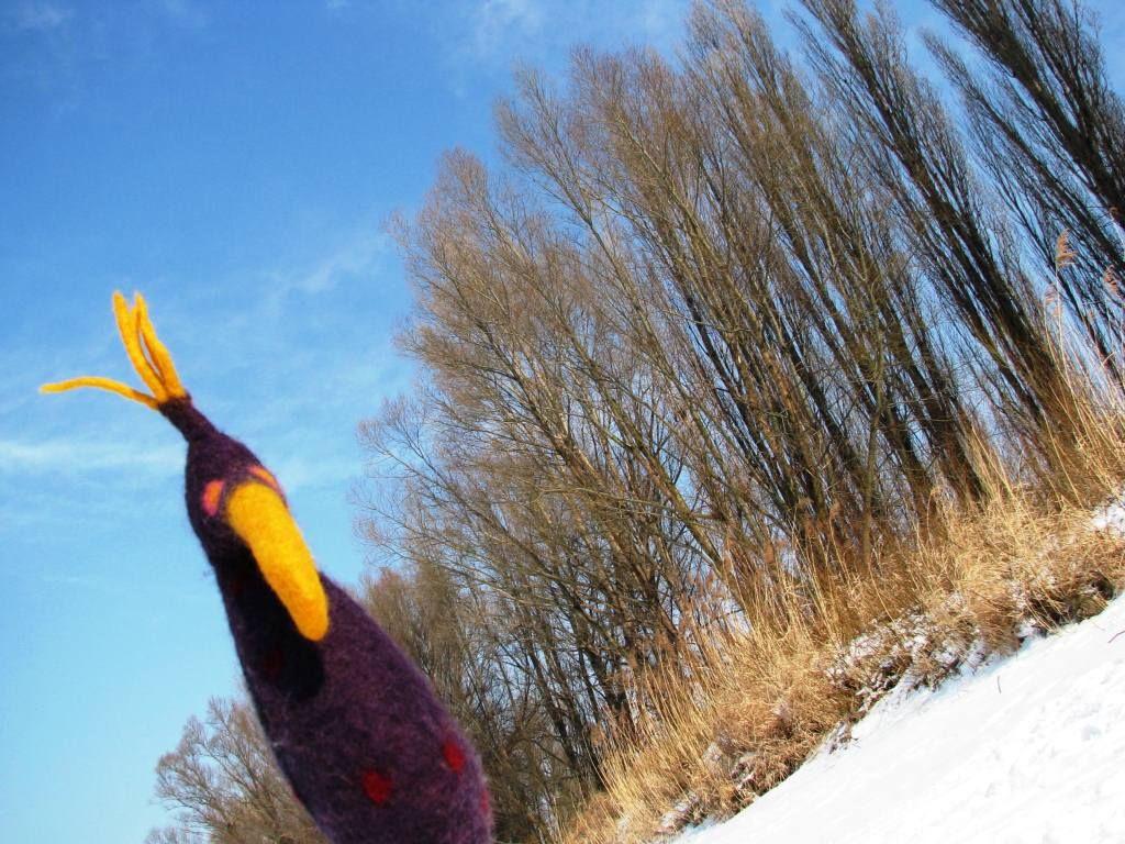 wintervogel Winter