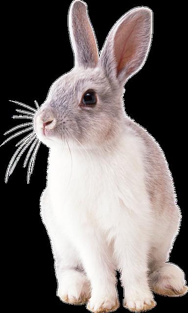 Rabbit Animal Nature Photo Rabbit Png Rabbit Pictures Animals
