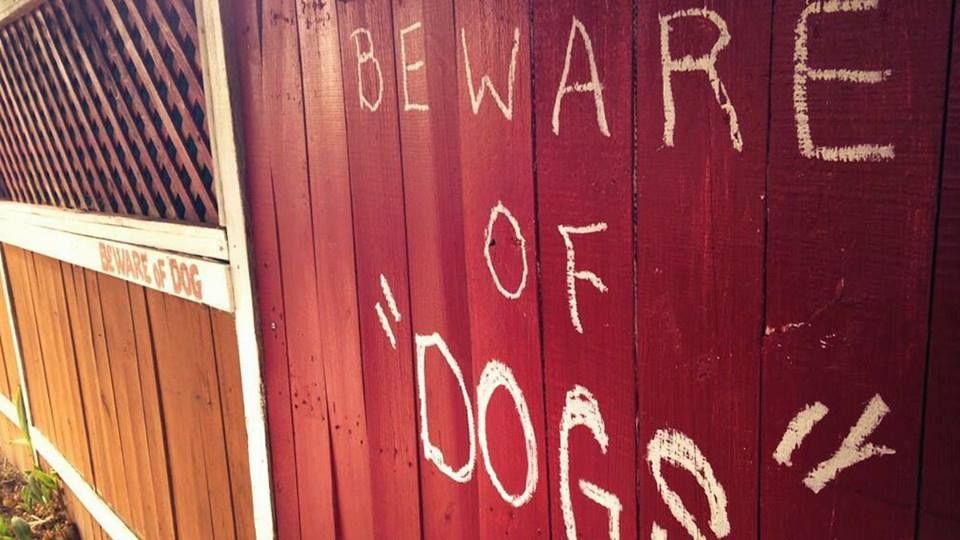 """""""DOGS"""". Suspicious."""