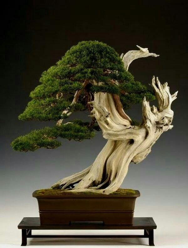 bonsai   bonsaiempire.com