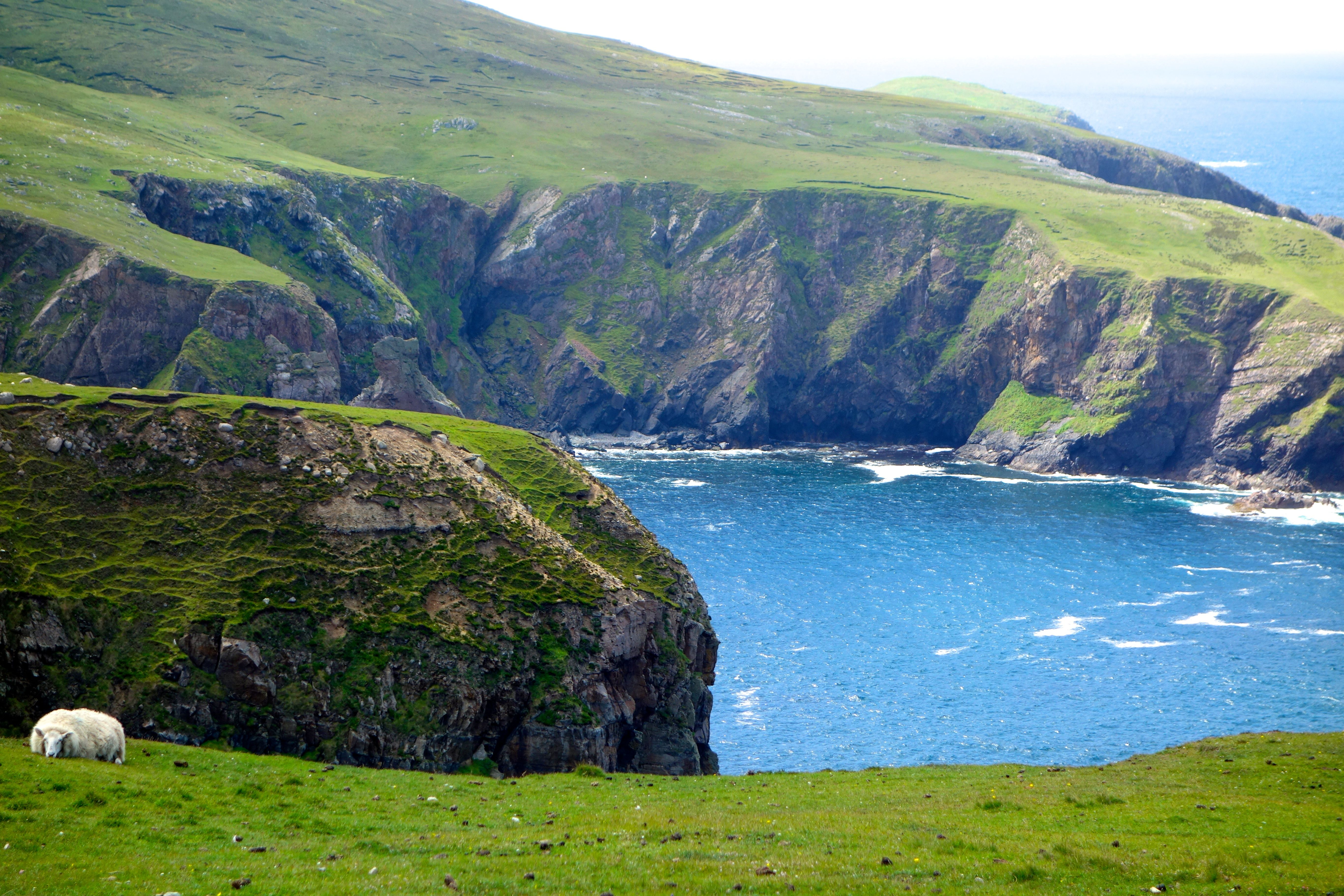 Sheep on Cliffs of Arranmore Island, Donegal Donegal