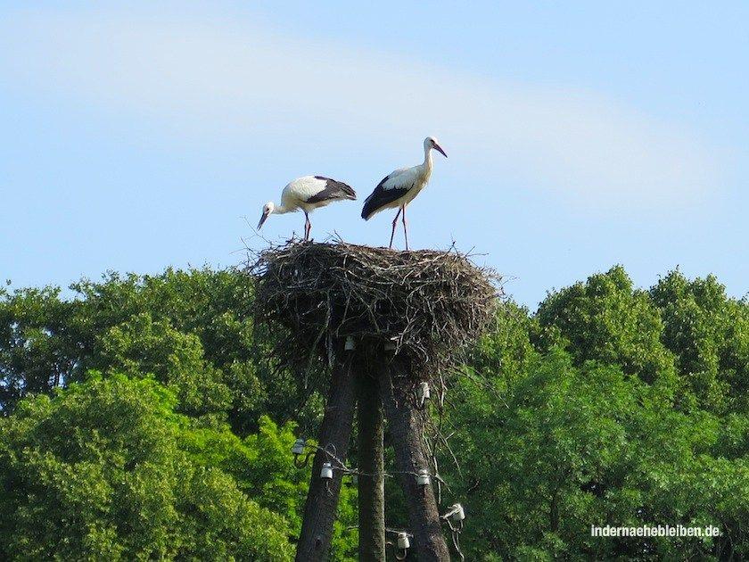 Storchennest; ganz Lettland ist ein Storchenparadies