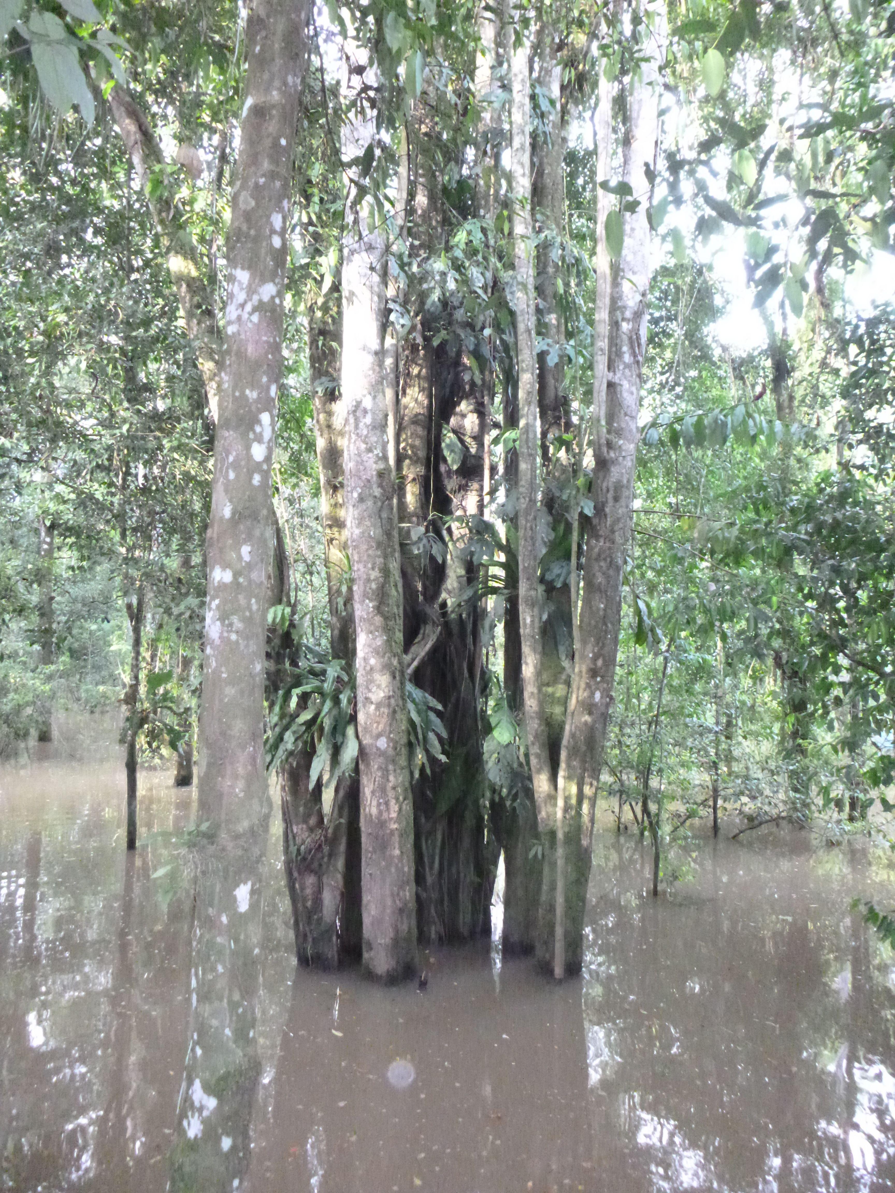 Rïo Amazonas