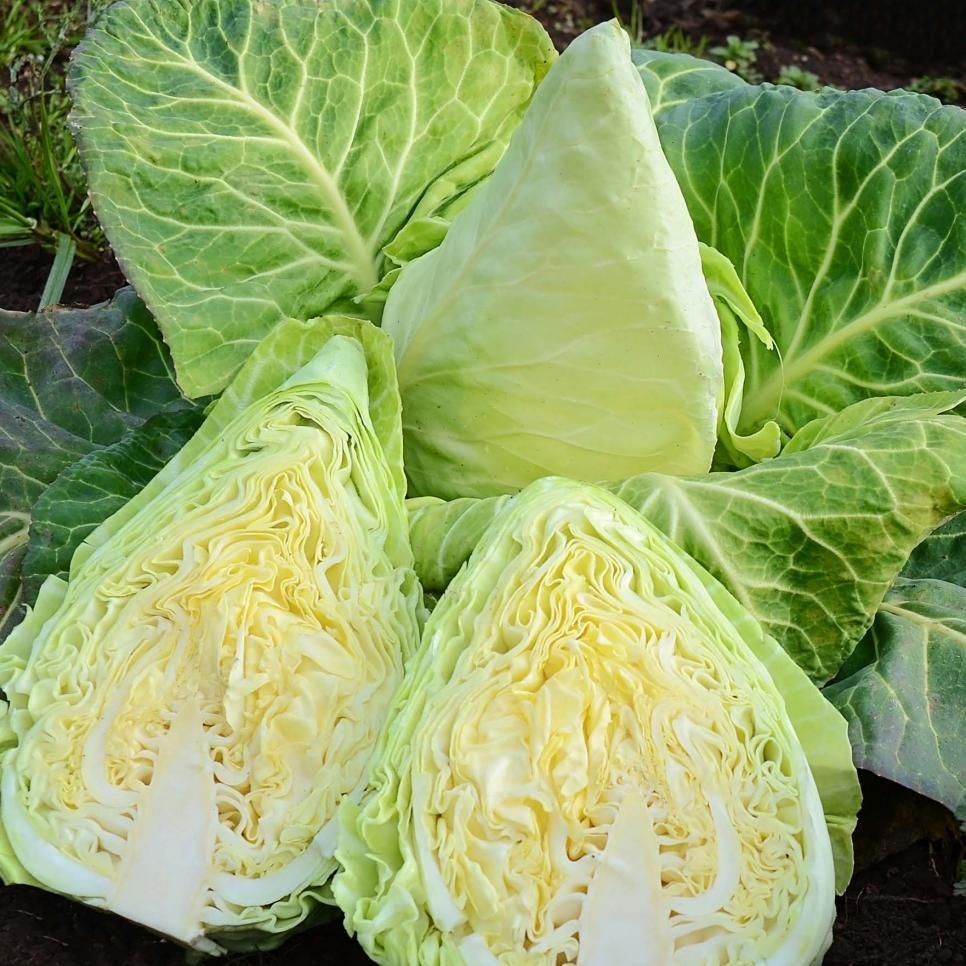 10 coolseason leafy greens for your garden hgtv