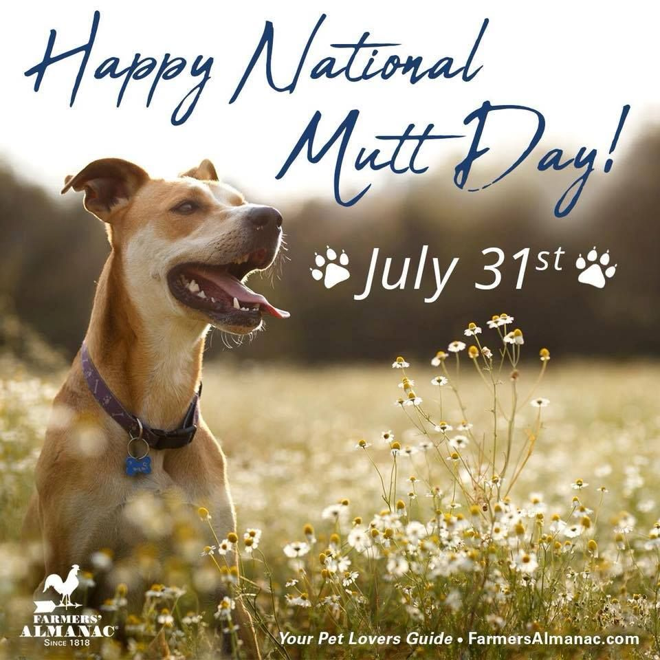 Happy National Mutt Day!!! (With images) National mutt