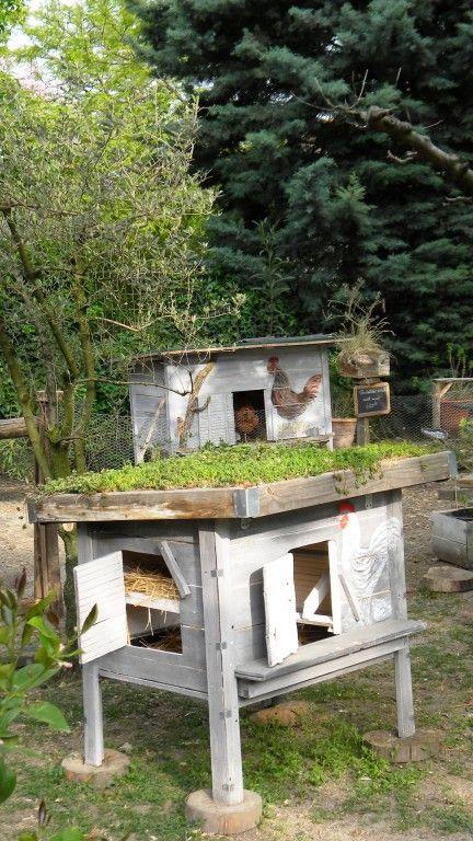 plan poulailler toit vegetal