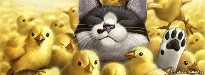 Katze 596 Facebook Titelbilder