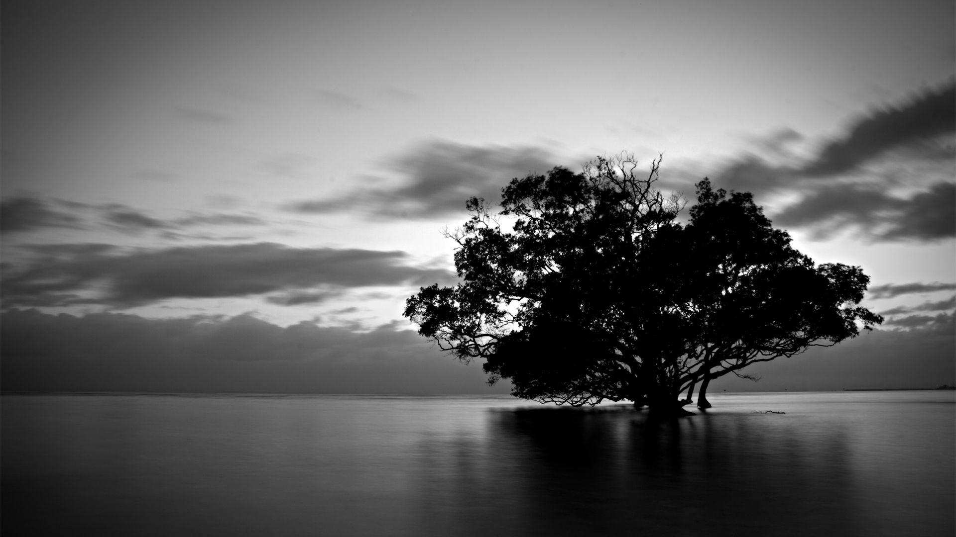 Black White Hd Wallpapers Nature Google Zoeken Black White Wallpaper White Wallpaper Tree Wallpaper Black White