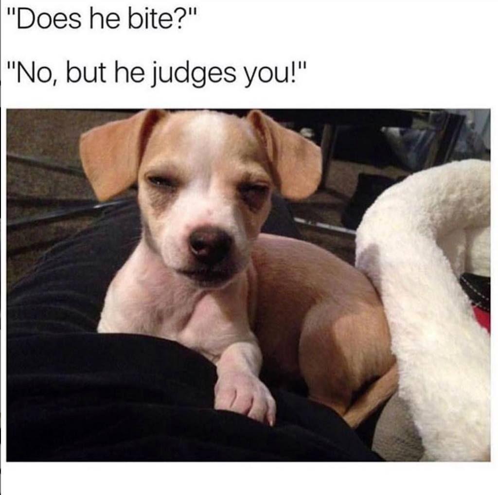 Dog Memes Of The Day 30 Pics Ep62 Animalmemes Dogmemes Memes Lovely Animals World Doghumor Dog Quotes Funny Funny Animals Cute Funny Animals