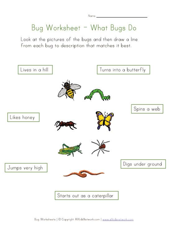 about bugs worksheet maybe turn this into a station adding lots – Bug Worksheets