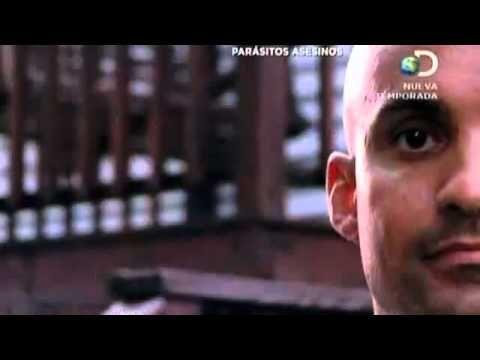 parasitos asesinos discovery channel español latino completo