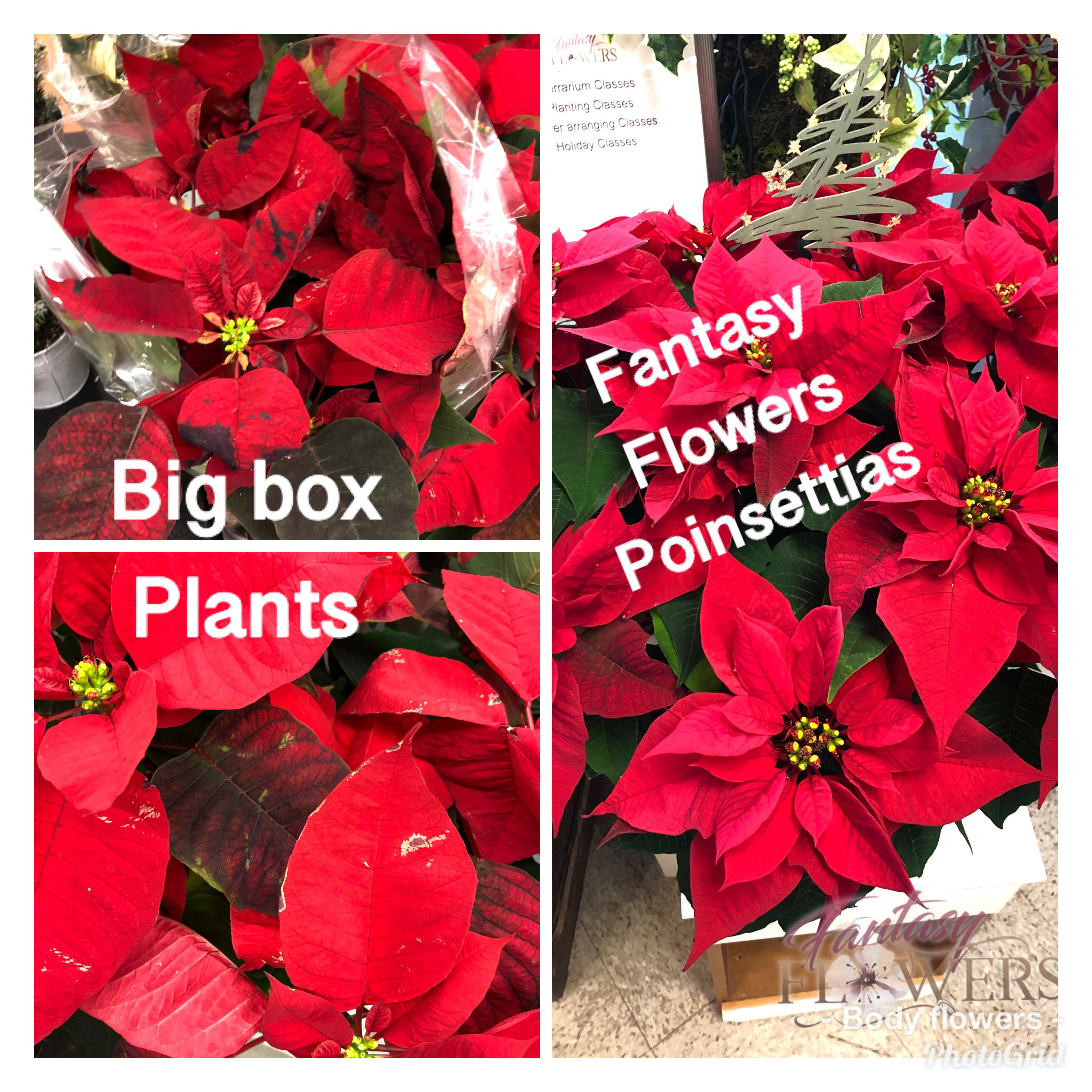 Are You Suffering From Big Box Coma I See People Mindless Pushing Carts Up And Down Aisles Searching For Gi Flower Delivery Fresh Flower Delivery Flower Gift