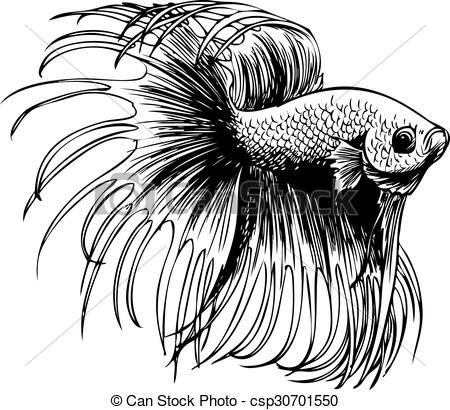 Clipart Vector Of Betta Splendens Siamese Fighting Fish Freehand Sketch Csp30701550 Search Clip Art Betta Fish Tattoo Fish Sketch Siamese Fighting Fish
