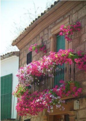 pink by marian dise o de jardines pinterest balkon blumenk sten und balkonpflanzen. Black Bedroom Furniture Sets. Home Design Ideas