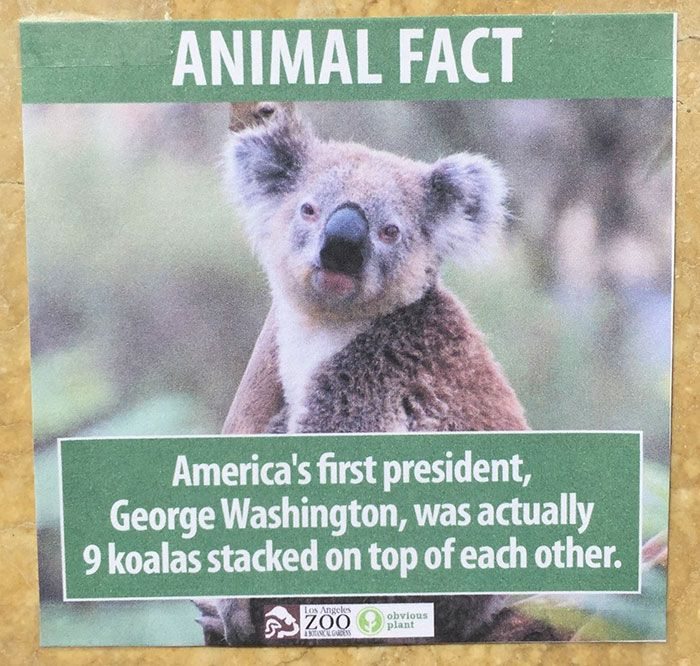 Comedian Posts Fake Animal Facts All Over Los Angeles Zoo Funny Animal Facts Animal Facts Fake Animals