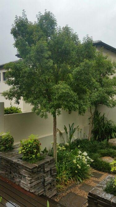 6503216b8335dcde8719f177a211e0ae - Trees For Small Gardens South Africa