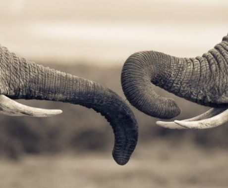 Tusks And Trunks photographed by Mario Moreno