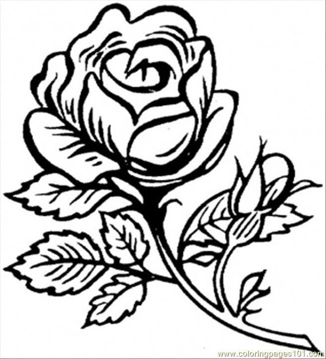 flower page printable coloring sheets printable coloring page beautiful big rose