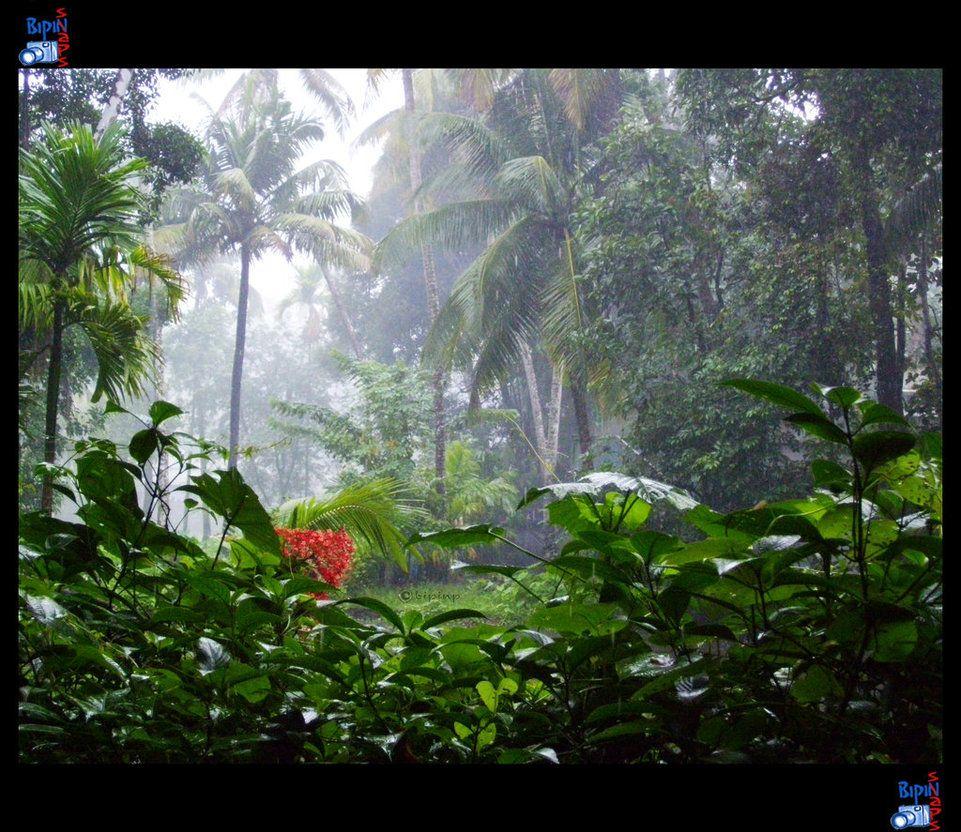 Monsoon In Kerala Beautiful Monsoon At Kerala Pinterest Kerala Incredible India And