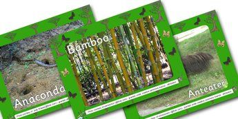 jungle and rainforest photo powerpoint powerpoint power point