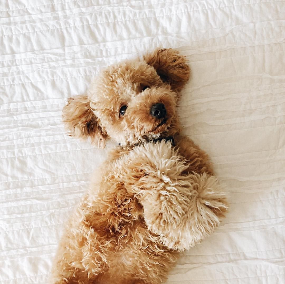 My Dog Peed On My Persian Rug: Pin By Thien Tran On When Life Gets Ruff