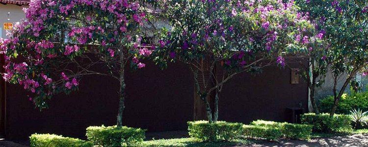 Plantar árvores sem medo - 25 Árvores que você pode plantar sem medo de destruir sua calçada e a rede elétrica Árvores são especiais e fundamentais nas ruas e avenidas, pois, além de embelezar, elas possuem um importantíssimo papel no equilíbrio térmico, refrescando onde quer que estejam. Além dessa importante caracterís... - http://fertilizantenpk.com.br/ecoblog/2017/08/11/plantar-arvores-sem-medo/