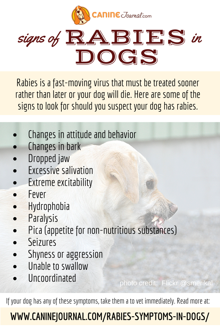 Signs Of Rabies In Dogs Vet Medicine Dog Infographic Dog Grooming Tips