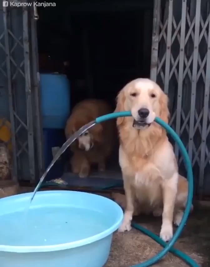 Best Funny Dogs I Don't Mind If I Do. Thank You. I Don't Mind If I Do. Thank You. #pets #funny #dogs #gifs #funnygifs 9