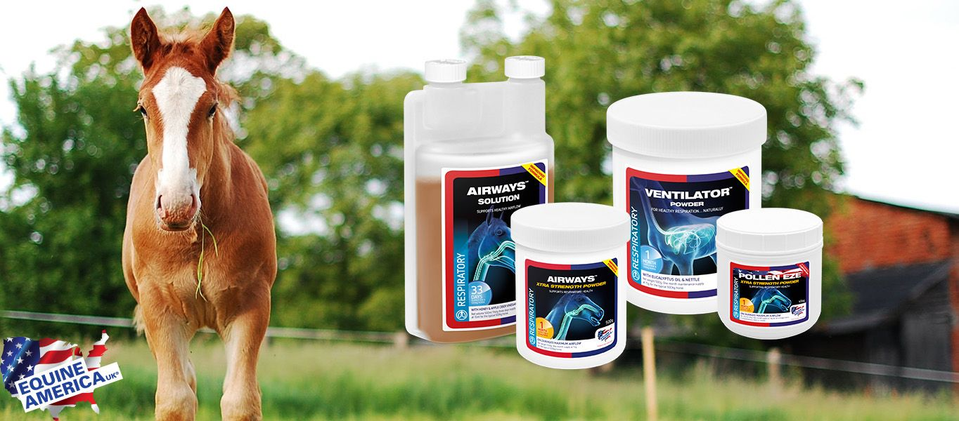 Equine America Cortaflex Equestrian Supplement Experts How To Increase Energy Horse And Human Natural Health Care