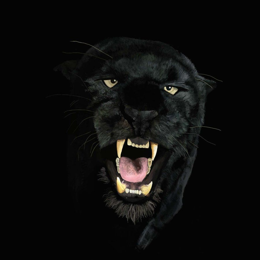Black Panther Wallpaper 4k Iphone 3d Wallpapers Animal Wallpaper Black Panther Hd Wallpaper Cat Dark