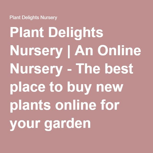 Plant Delights Nursery An Online The Best Place To New Plants