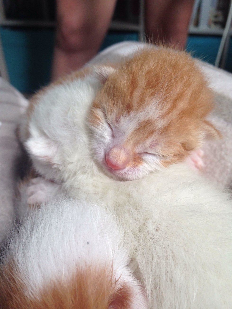 Kittens Found In A Box Cuddle Together To Keep Each Other Alive Chat