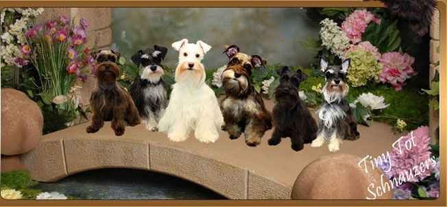 Too Cute Toy Puppies Teacup Puppies Schnauzer Puppy