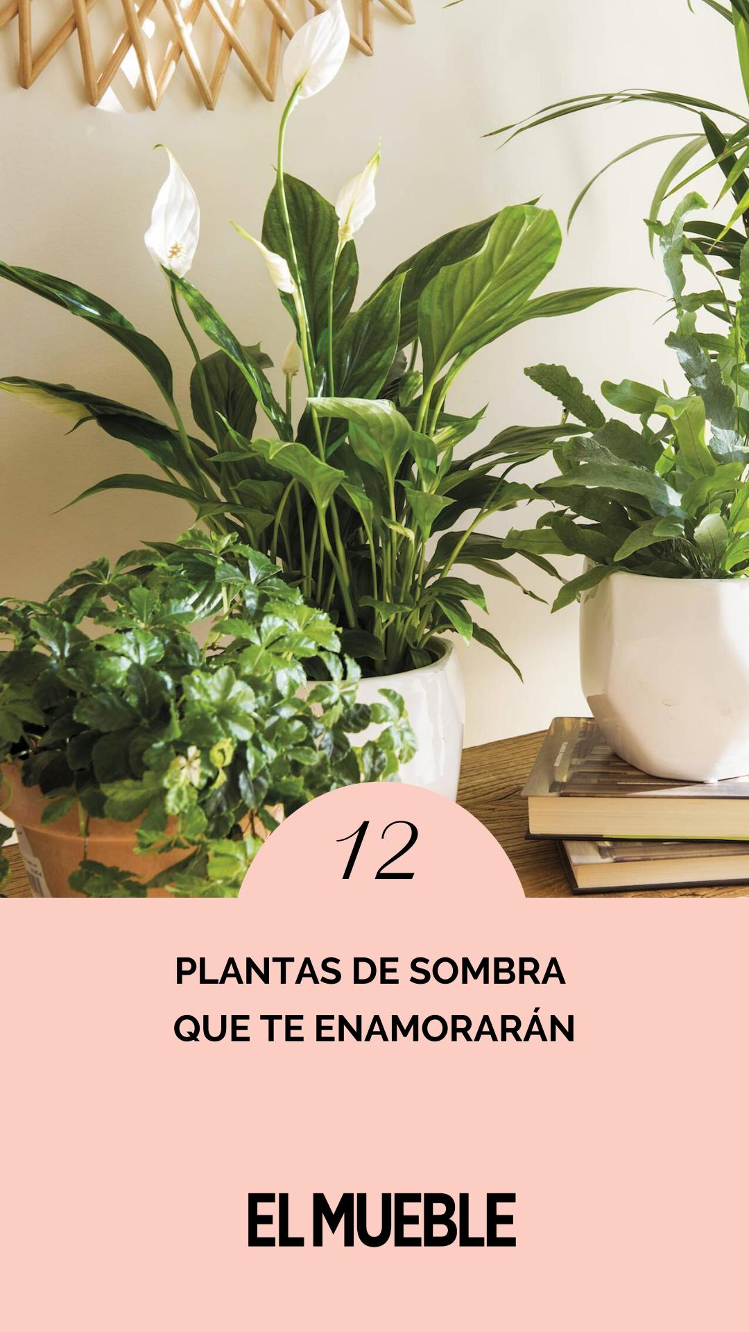 Las plantas necesitan sol para crecer y estar esplendorosas. Pero no todas. Si tu casa no tiene mucha luz o tu terraza está a la sombra, aquí tienes 12 plantas que viven como reinas lejos de los rayos del sol. Toma nota