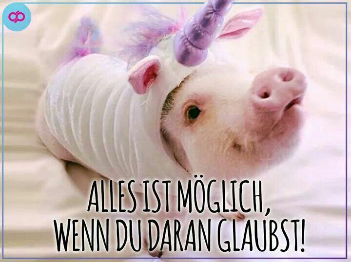 Einhorn Schwein
