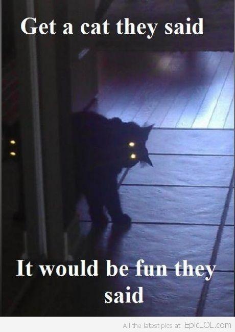 spooky-cat-is-early-_1334050715_epiclolcom.jpg (460×649)