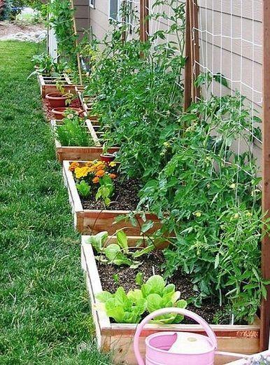 small vegetables garden for beginners_49 smallvegetablegardeningideas - Small Vegetable Garden Ideas