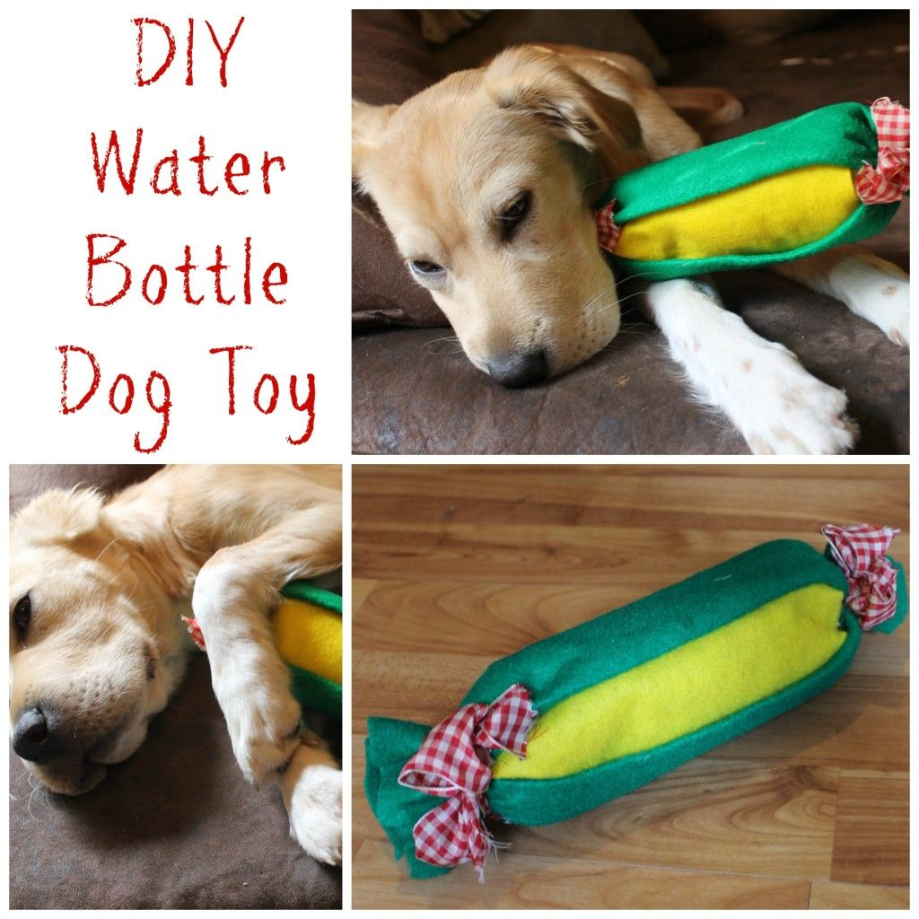 Easy Diy Water Bottle Dog Toy Diy Dog Stuff Dog Toys Diy Dog Toys