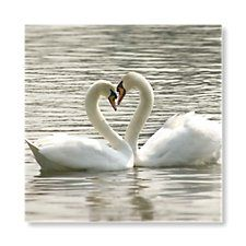 Swans Invitation by Bride & Groom Direct - Available through the Wedding Heart website: http://www.weddingheart.co.uk/bride-and-groom-direct---wedding-invitations.html