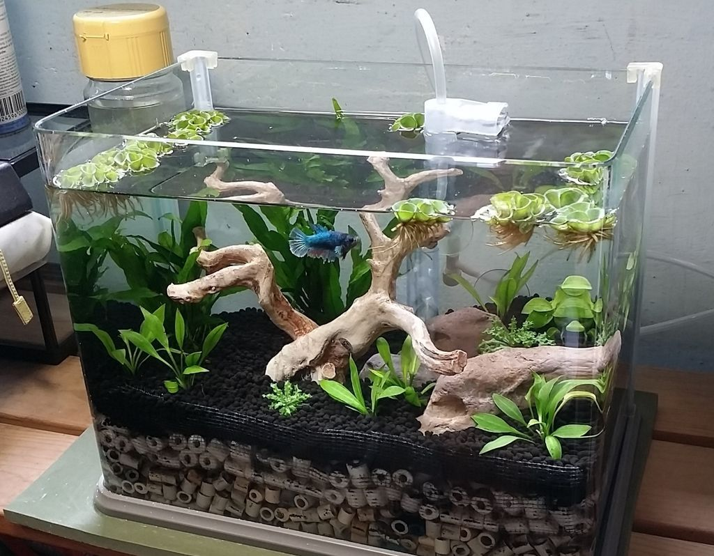 Simple female betta tank scape new setup to buy in