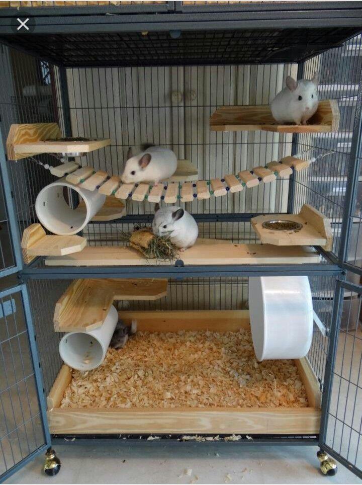 Great chinchilla cage setup animals pinterest chinchilla chinchilla jaula y mascotas - Juguetes caseros para conejos ...