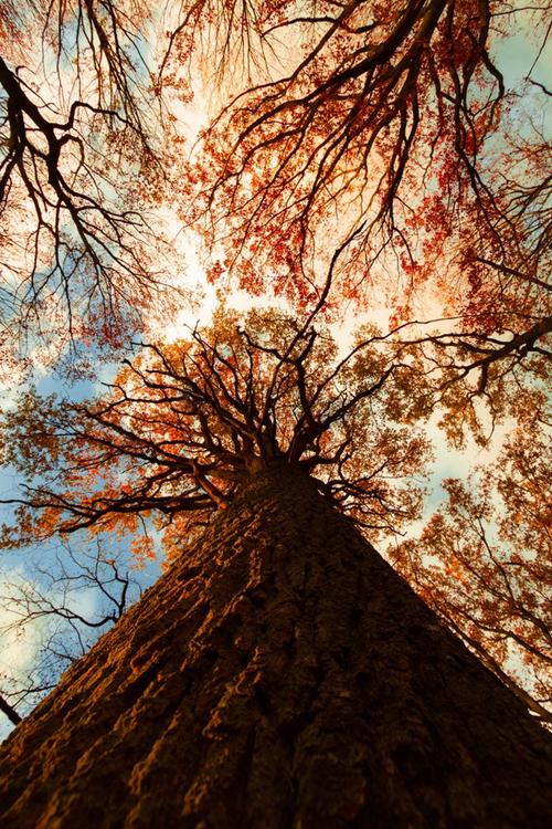 Au Pied De Mon Arbre : arbre, Atraversso:, Arbre, Nicolas, Boulanger, Beautiful, Nature,, Tree,, Nature