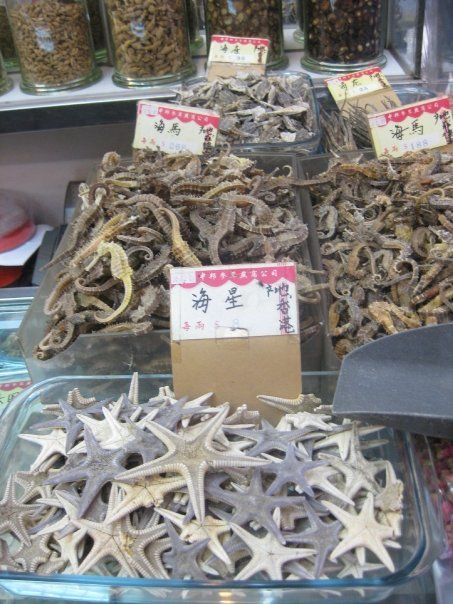 starfish/seahorses for sale, Macau, China