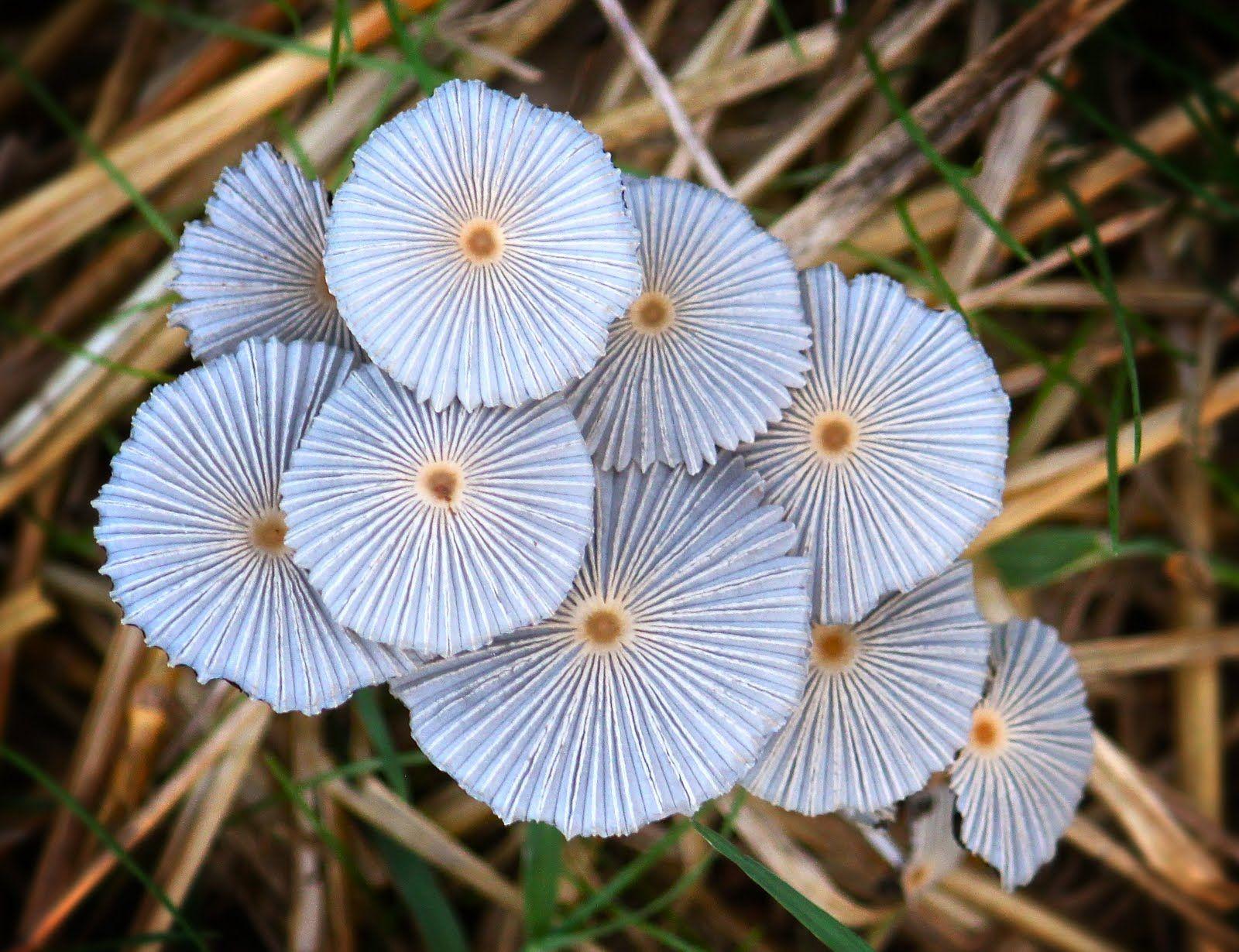 Taylor Lockwoods MUSHROOM PHOTO INDEX Googleda Ara MANTARLAR - Photographer captures the beautiful diversity of australias fungi