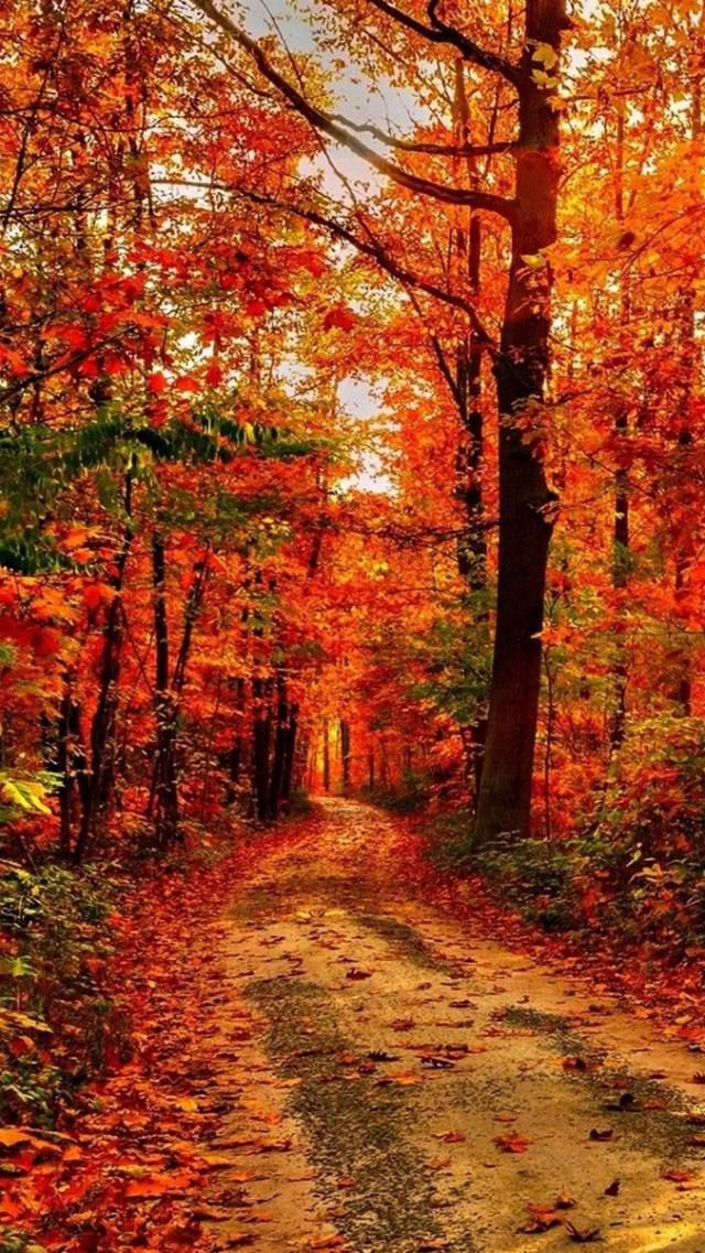 This wallpaper is shared to you via ZEDGE … | Autumn | Autum…